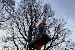 Oak Tree Pruning with Cherry Picker